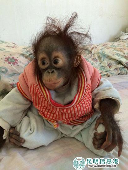 云南野生动物园上千动物宝宝和小朋友过六一